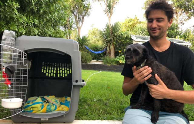 Dog makes it to NZ after year-long journey