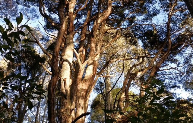 Fears northern pathway will damage precious native bush