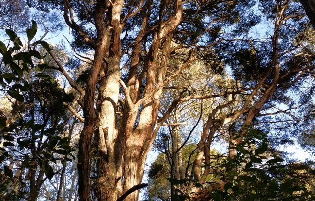 Fears northern pathway will damage precious native bush