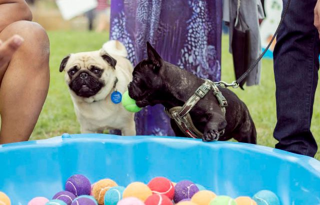 Silo Park hosting second annual dog day afternoon