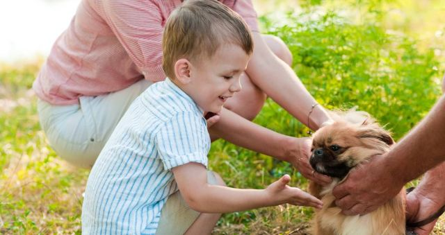 'Dramatic increase' in demand for dog behaviour help