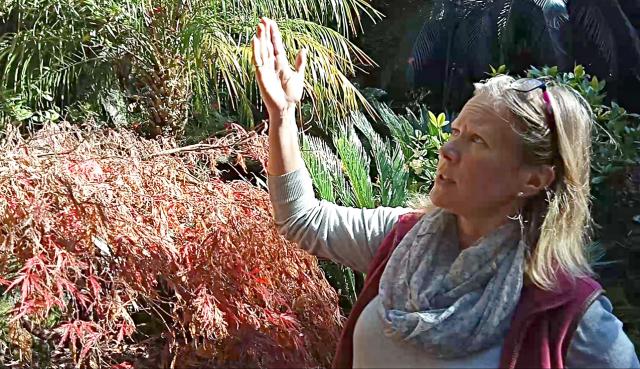 Drought dries up Auckland memorial garden