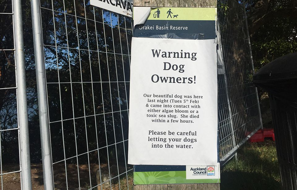 Orakei Local Board: Sea slugs poster 'scaremongering tactic'