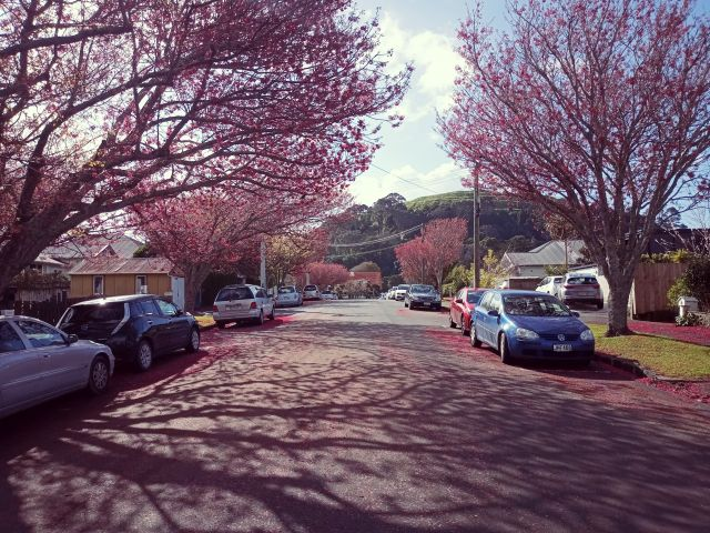 People flocking to annual tui and blossom fest